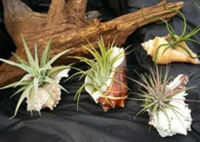 T & T Botanicals